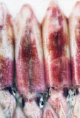 calamares-fresco