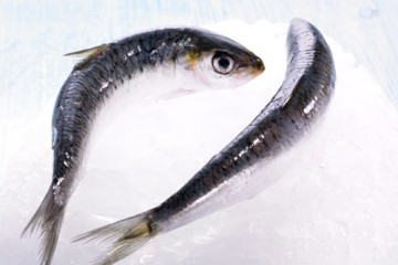 sardinas-producto-500x400