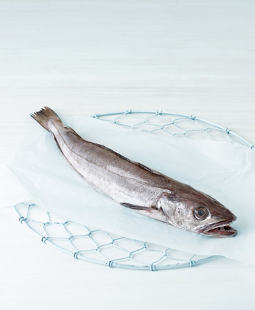 pescadilla-370x450