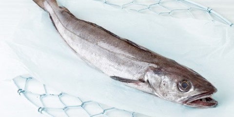 pescadilla-500x400