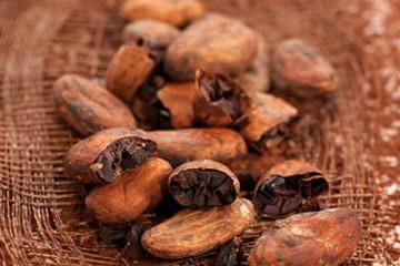 cacao-500x400