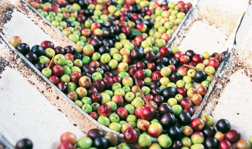 saludable-aceite-oliva3