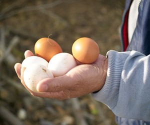 saludable-huevos-2