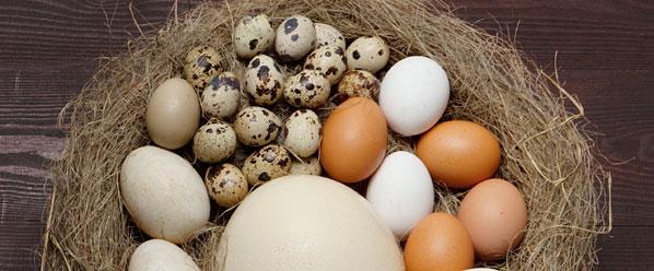categoria-producto-huevo