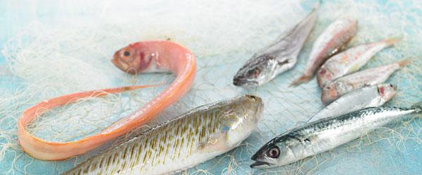 categoria-producto-pescado