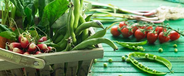 categoria-producto-verdura