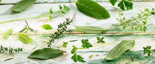 categoria-productos-hierbas