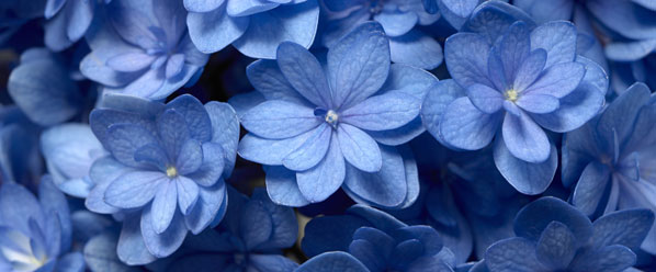 categoria-sobre-la-mesa--flores