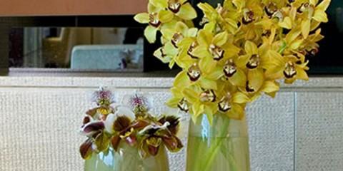 estilo-en-la-mesa-familia-de-orquideas-miniatura-500x400