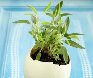 estilo-en-la-mesa-huevo-como-maceta-miniatura-500x400-