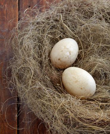 huevos-de-pato-370x450