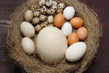 huevos-varios-500x400