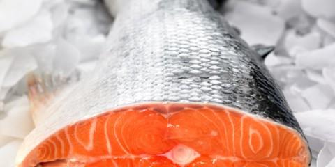 salmon-500x400