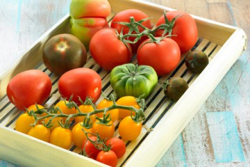 tomates-varios-500x400