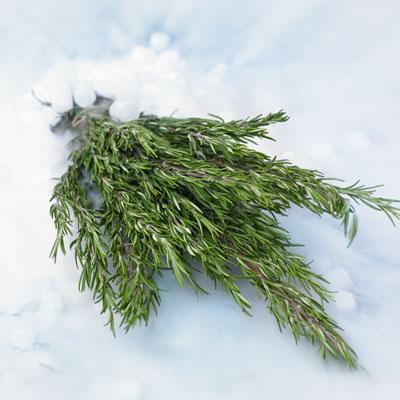 como-hacer-congelar-hierbas