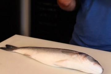 pescado-500x400