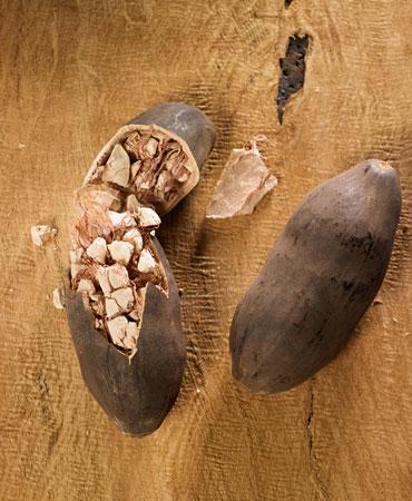 baobab-370x450