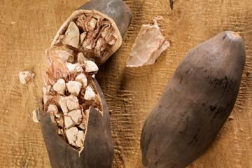 baobab-500x400