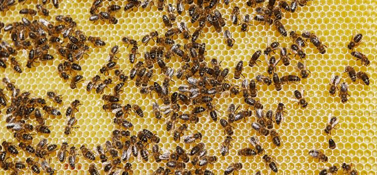 apicultura_ecologica_abejas_700x350
