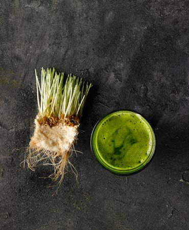 chupito-hierba-trigo-gras
