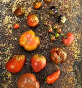 tomatesgen